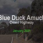 Blue Duck amuck